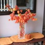 Dried Flowers: Chinese Lanterns