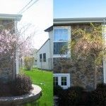 A Year in the Life of a Weeping Cherry