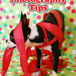 Holiday Pet Photography Tips {Guest Post}