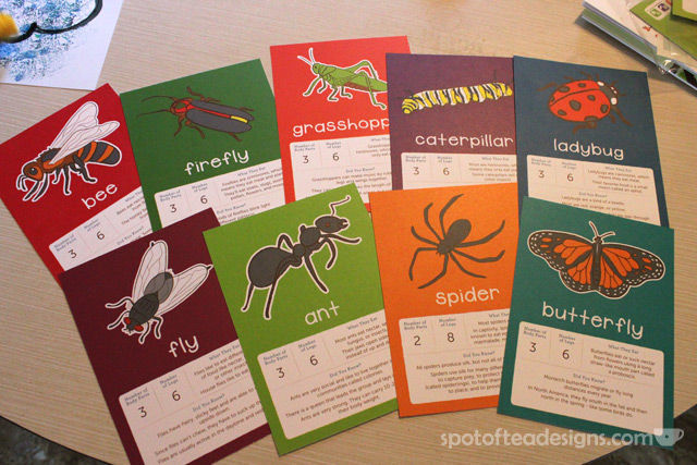 Kiwi Crate review: Bug flashcards | spotofteadesigns.com