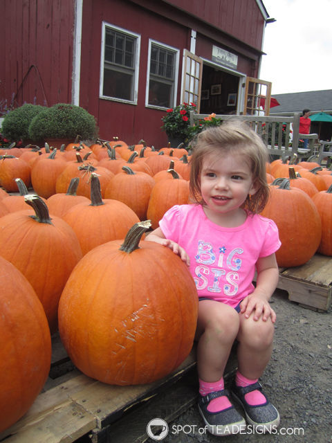 second year of #parenting lessons learned the hard way. #advice - bring a fold up tote to the pumpkin hayride  spotofteadesigns.com