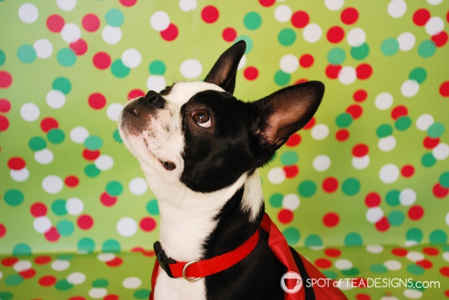 Holiday pet photography tips - how to get great shots for your Christmas cards | spotofteadesigns.com