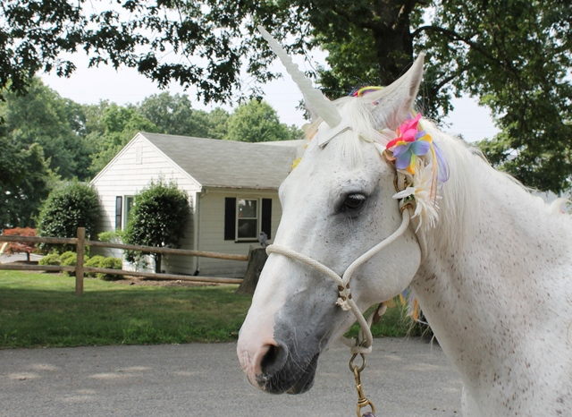 Unicorn birthday party - offer horse rides with a horse dressed up like a unicorn!   spotofteadesigns.com